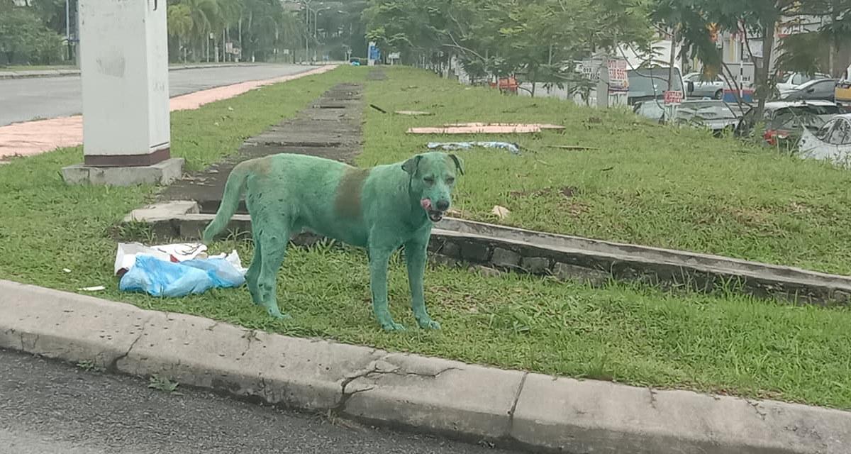 cane dipinto di verde