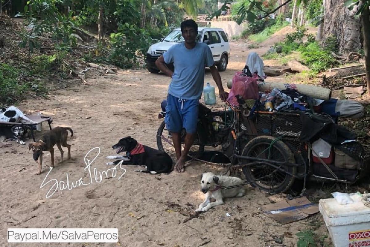 Eremita salva cani randagi