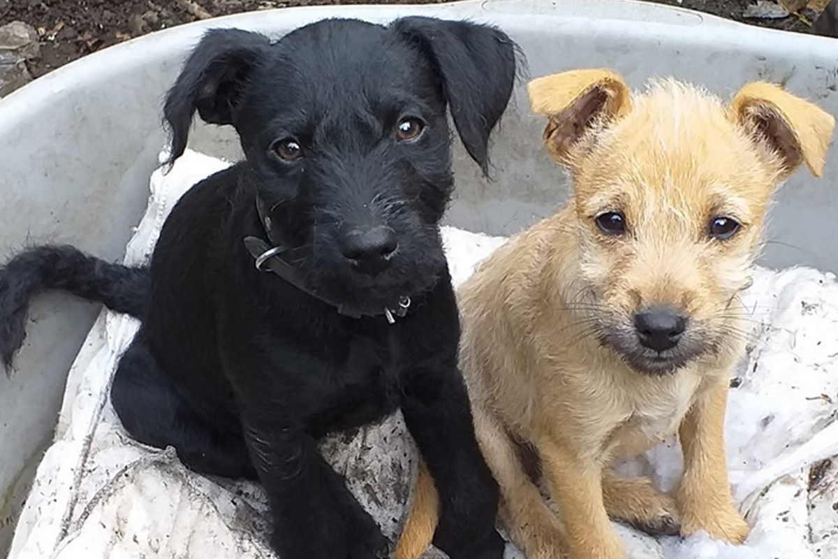 cucciolo-fuochiartificio