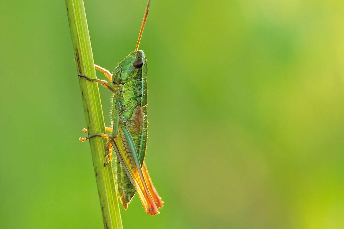 moria-insetti-germania