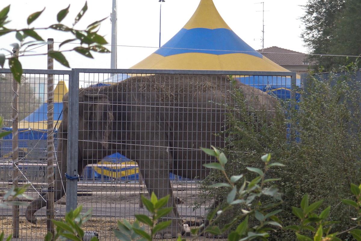 Elefante circo Brescia