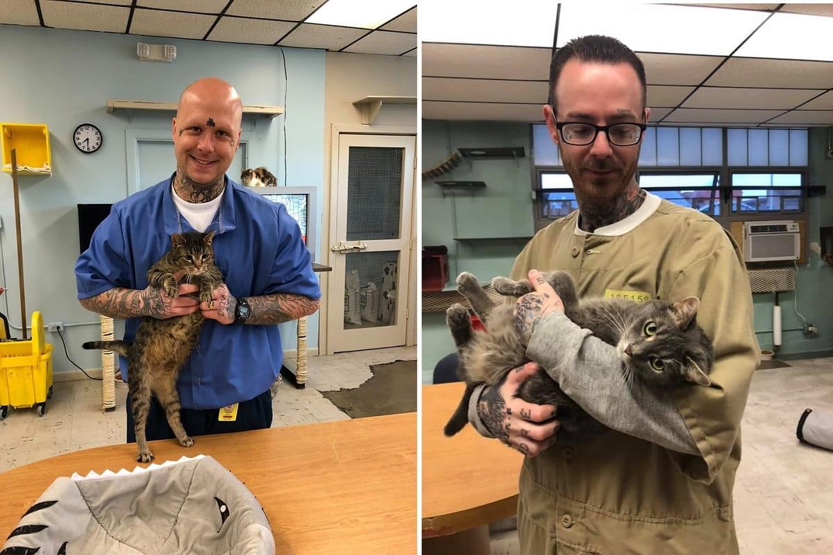 gatti e detenuti