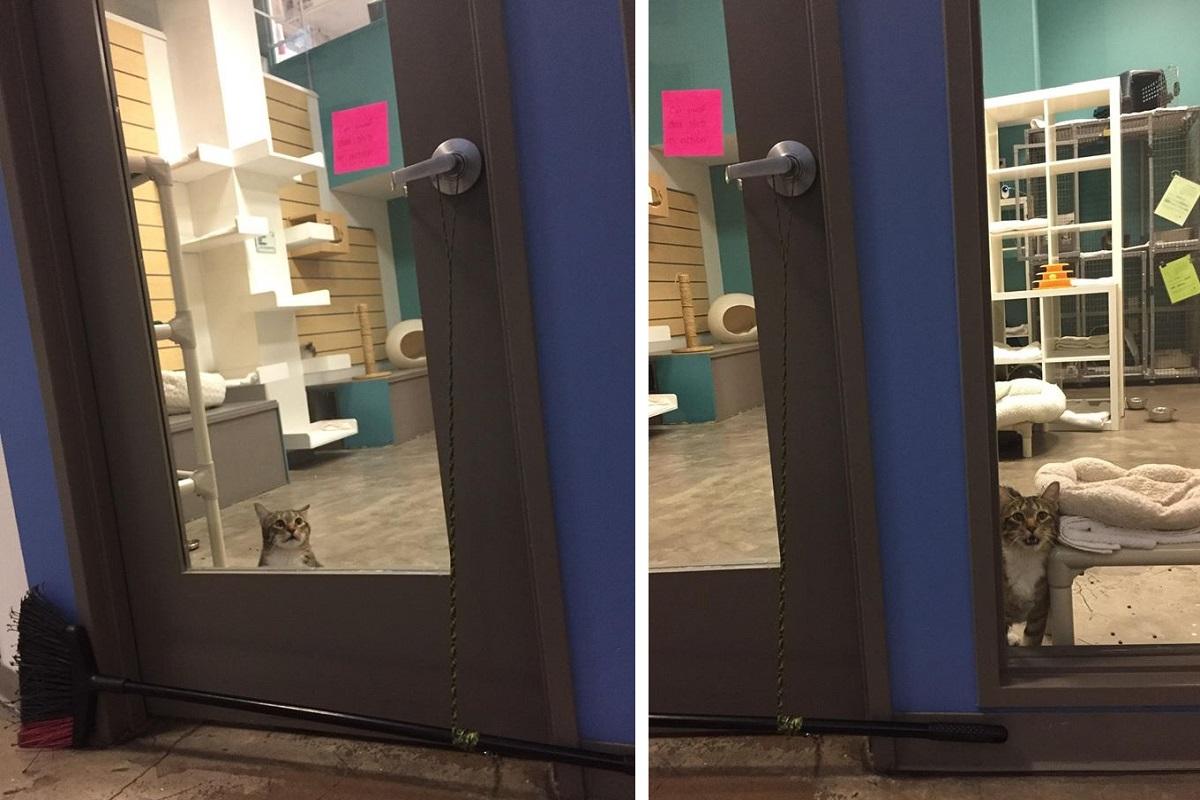Gatto che apre le porte