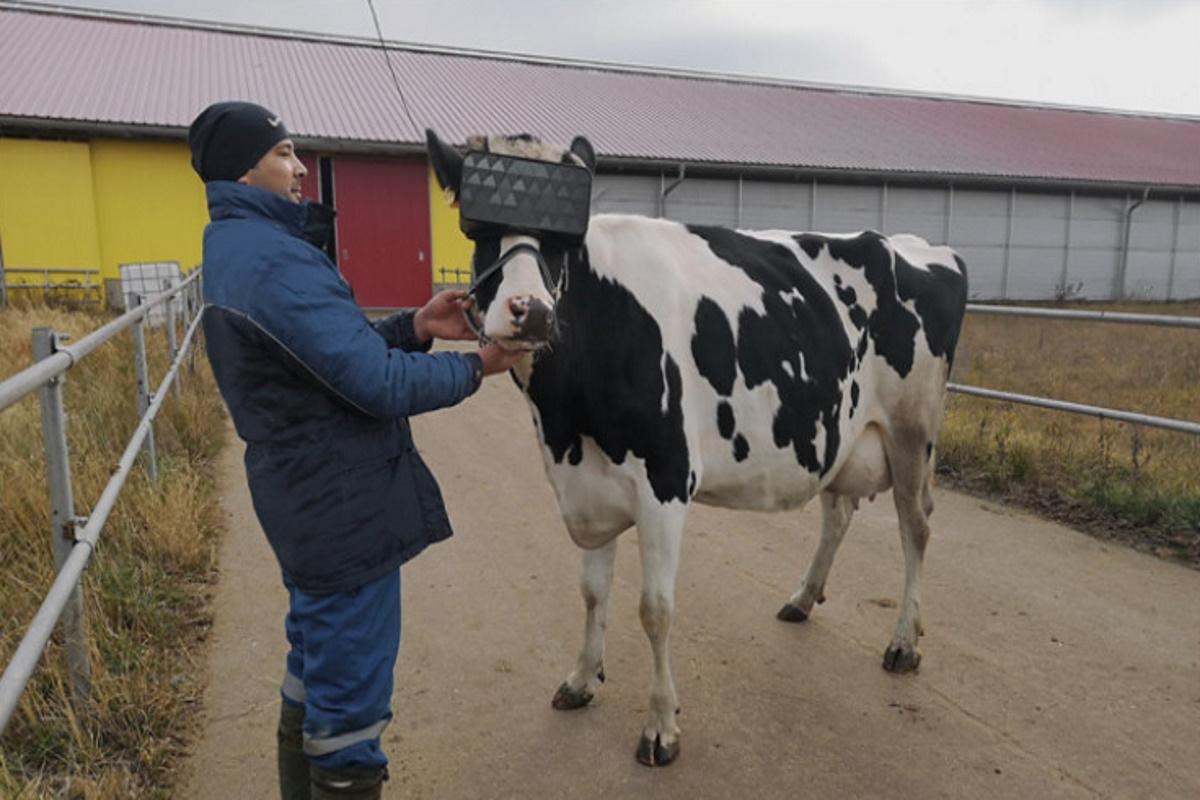 Regalo Mucca Da Latte.Prati Virtuali Per Una Migliore Produzione Di Latte Un