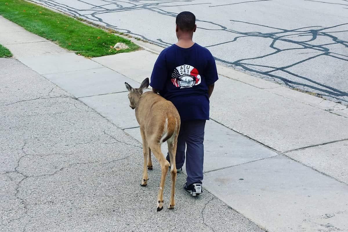 Un ragazzino ha salvato un cervo