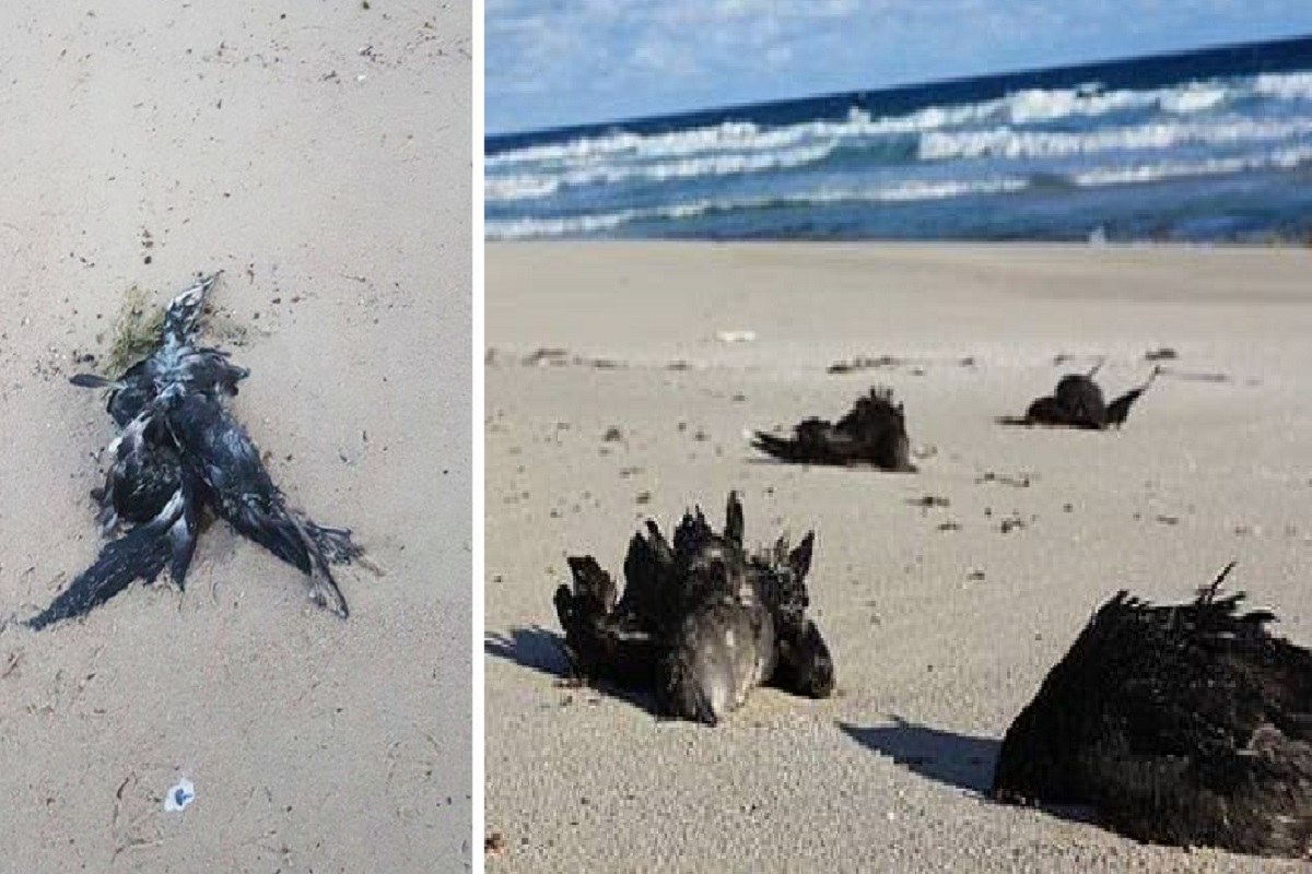 uccelli morti
