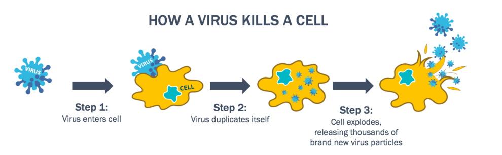Il Virus Messo A Punto Dagli Scienziati In Grado Di Uccidere Tutti I Tipi Di Tumore Greenme