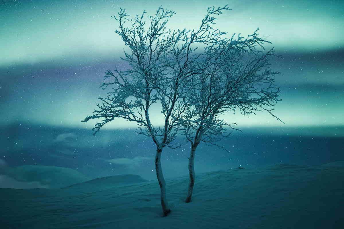 alberi Mikko Lagerstedt