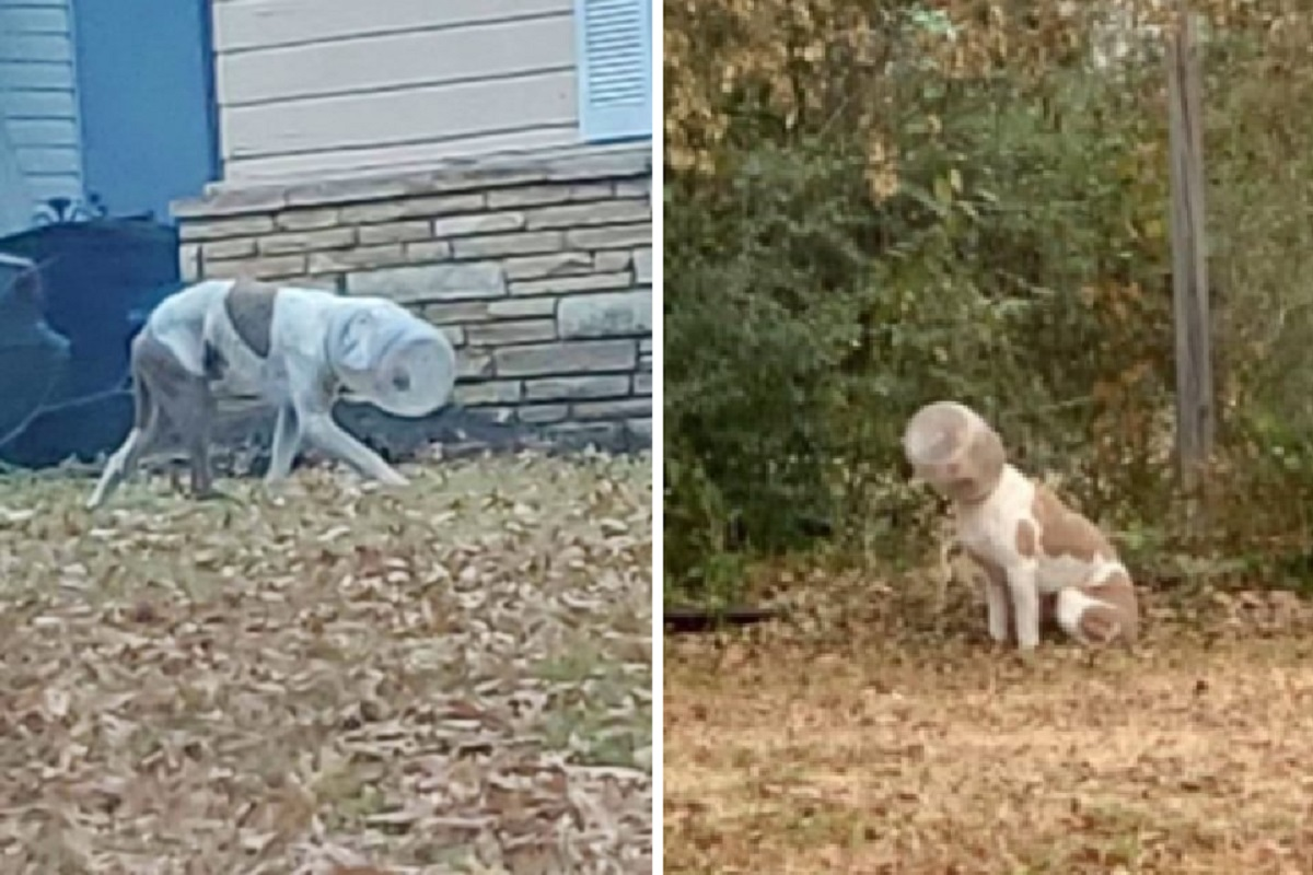 cane con secchio in testa
