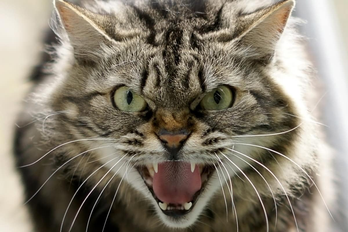 gatti sventano rapina
