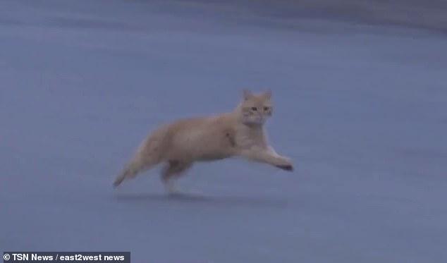 gatto uccide neonata