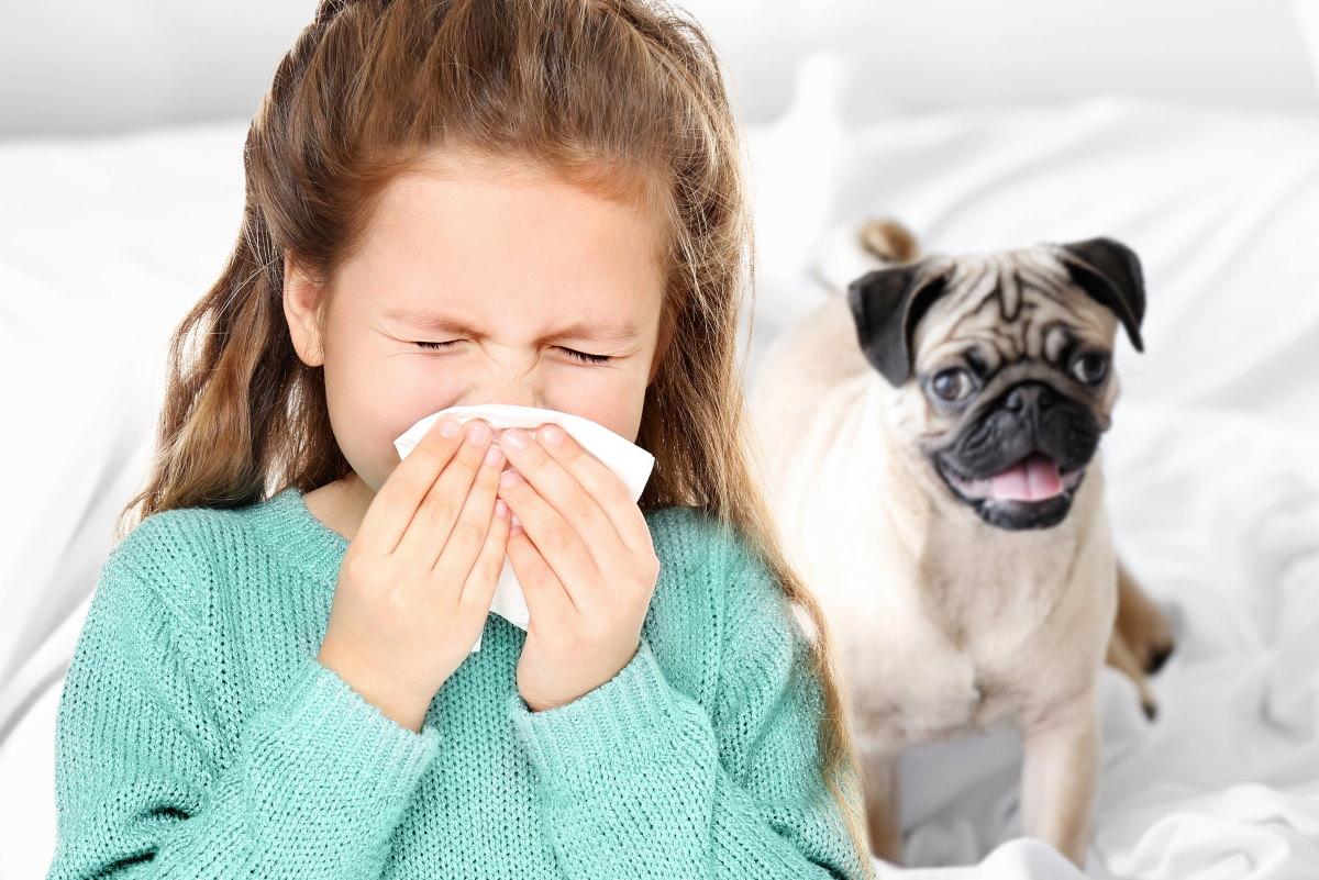 allergia cani proteina maschi