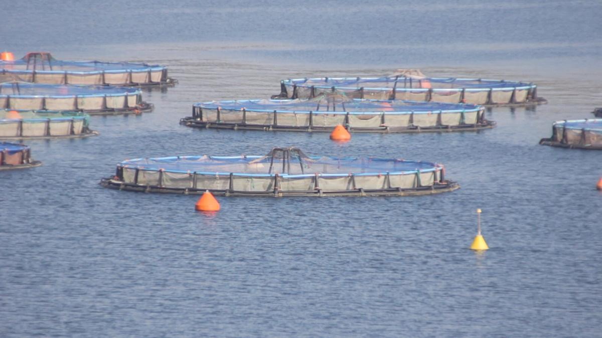 allevamenti-ittici