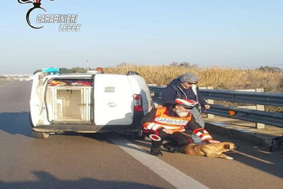 cagnolina salvata dai carabinieri