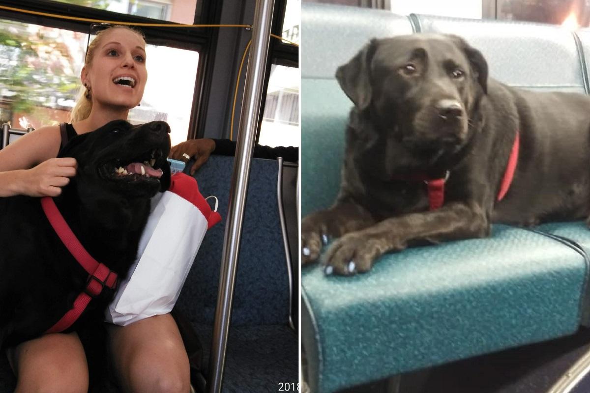 cane sale su bus da solo