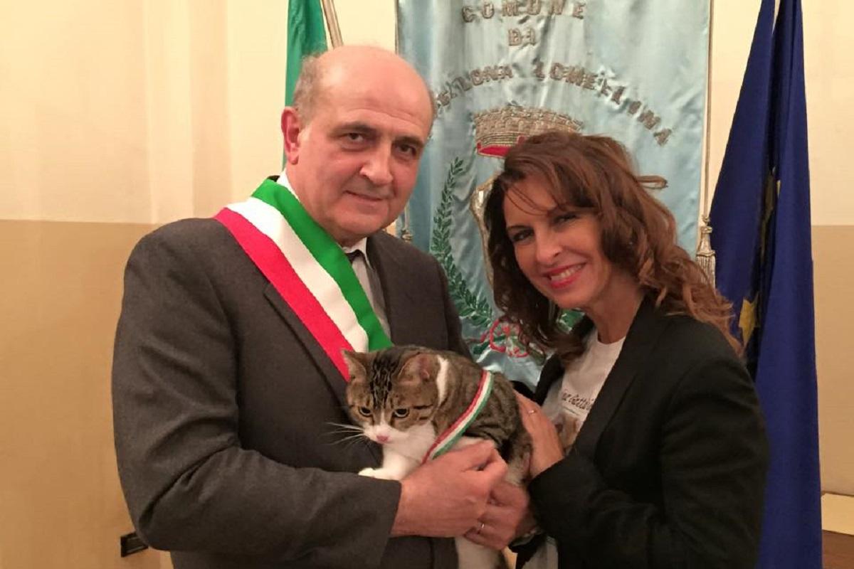 gatto sindaco