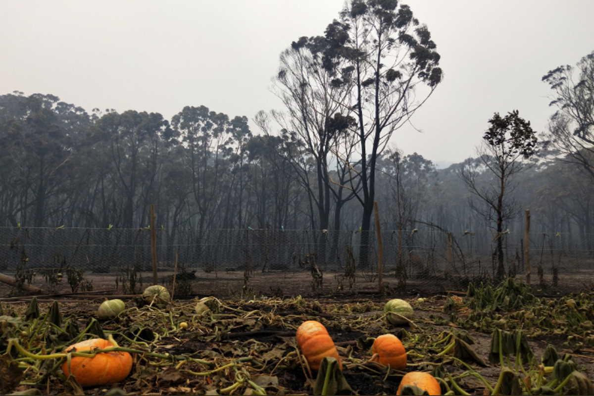 incendi zucche australia