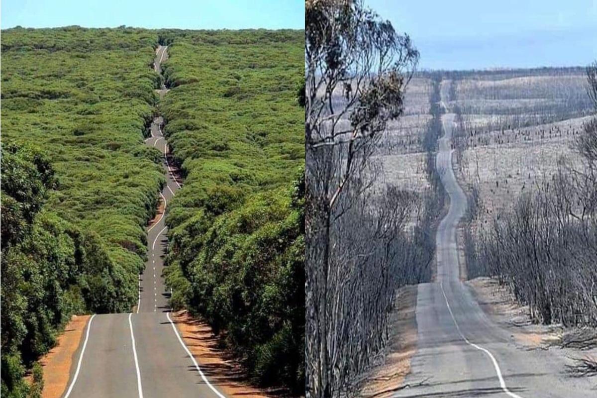 L'Isola dei canguri prima e dopo gli incendi