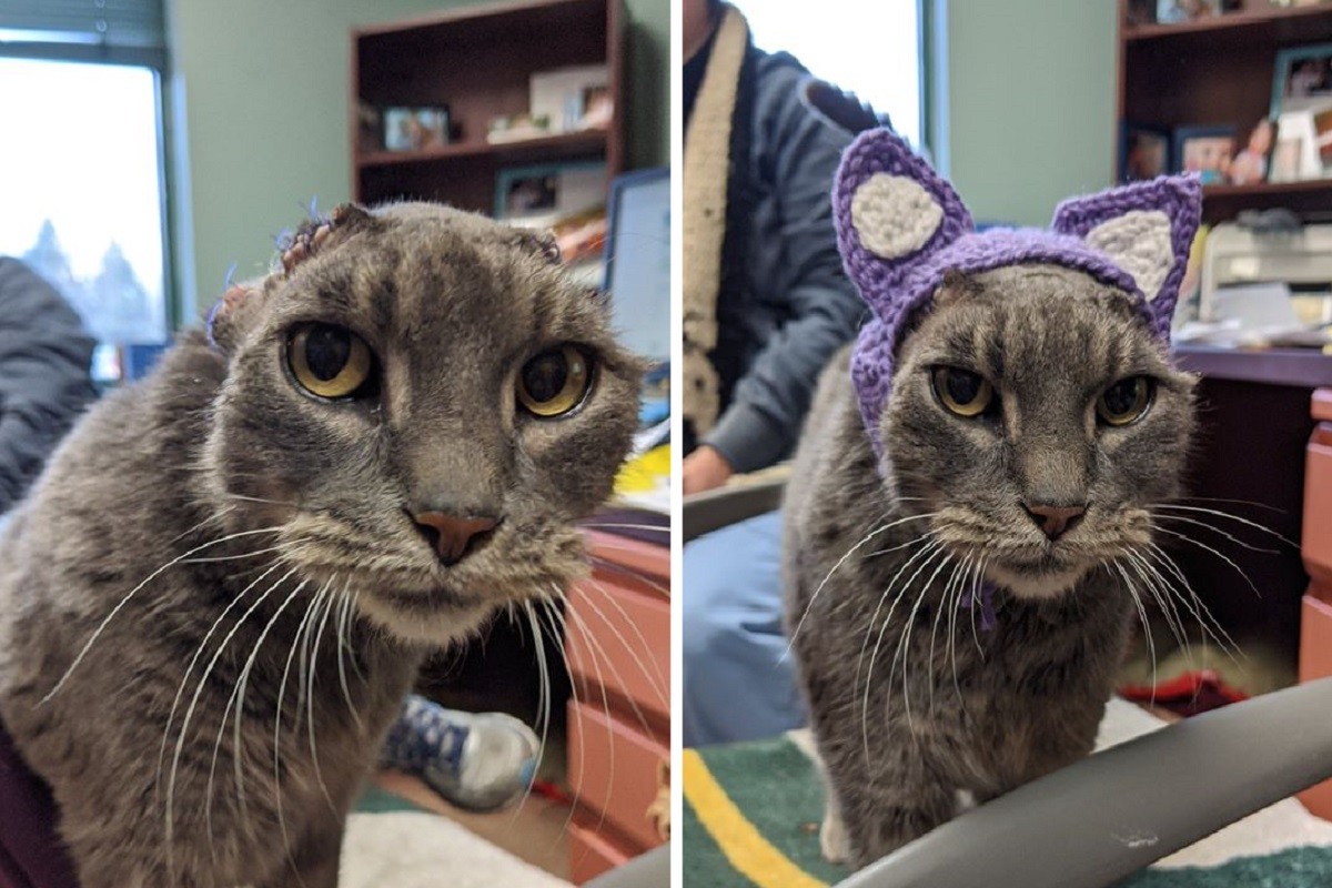 lady il gatto con il paraorecchi