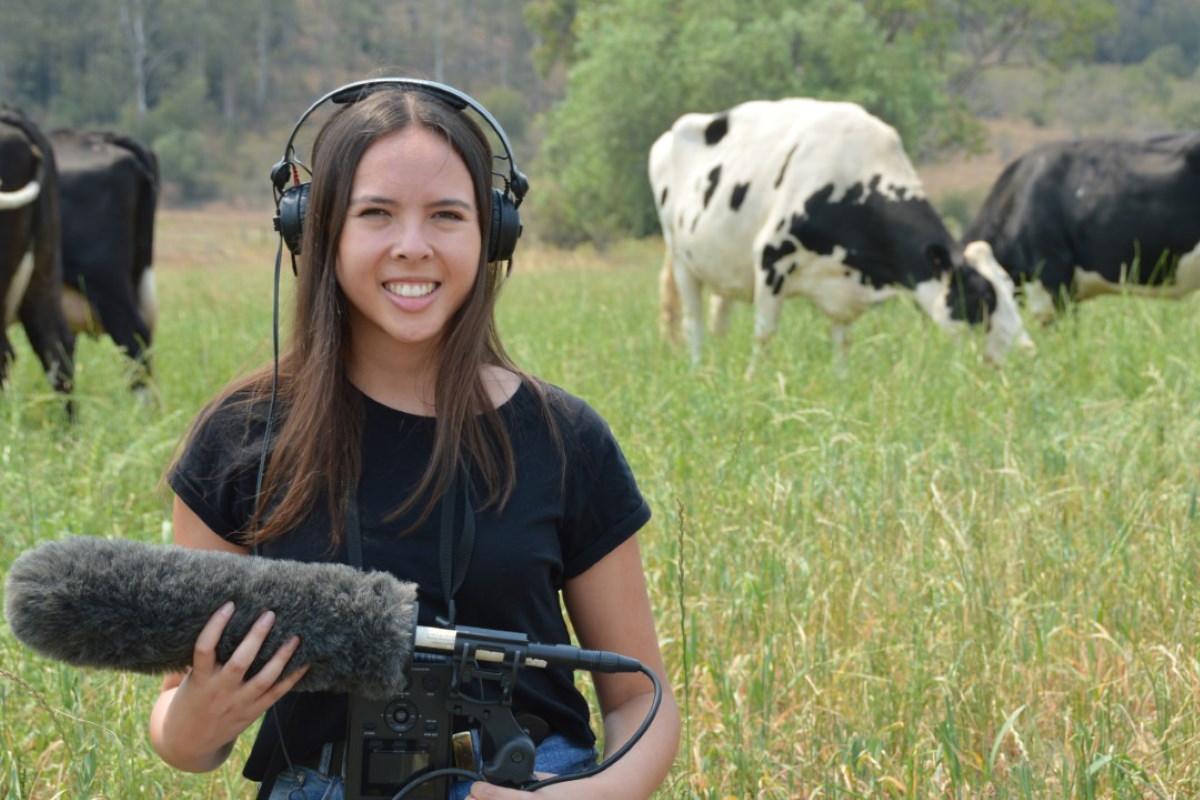mucche comunicazione voci individuali