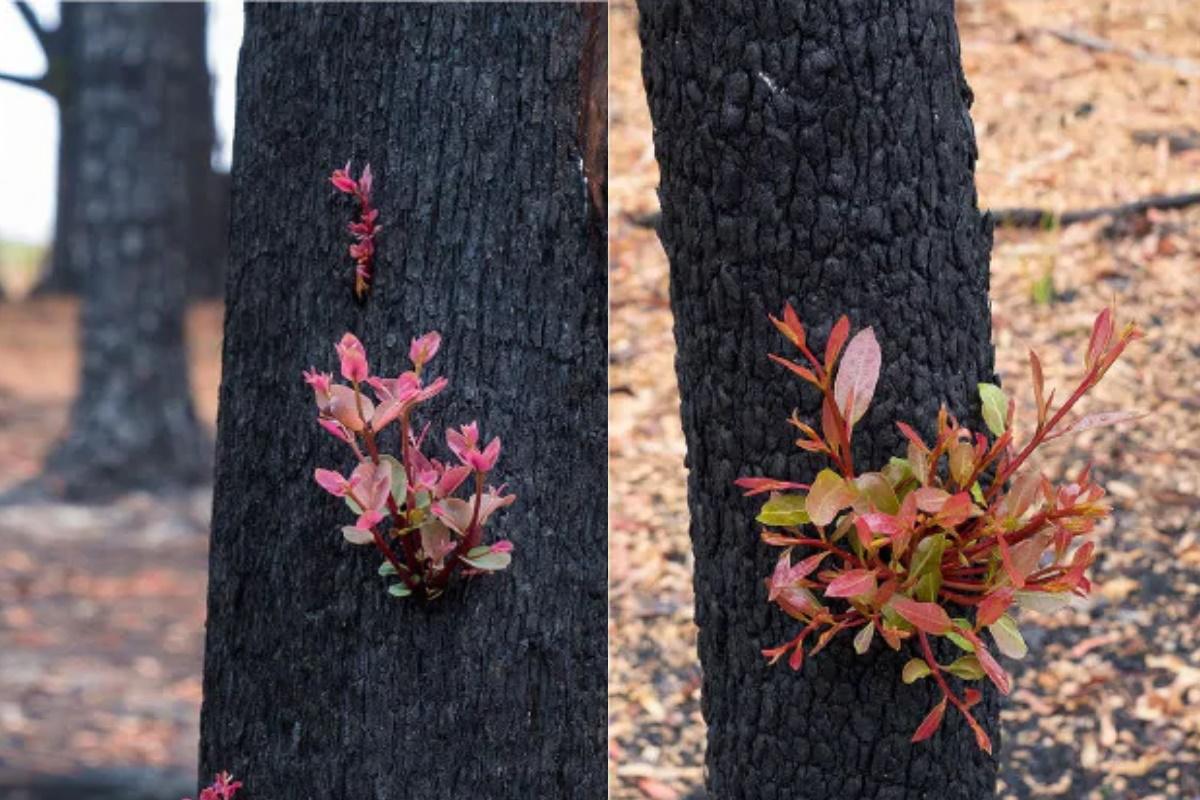 La natura si rigenera in Australia