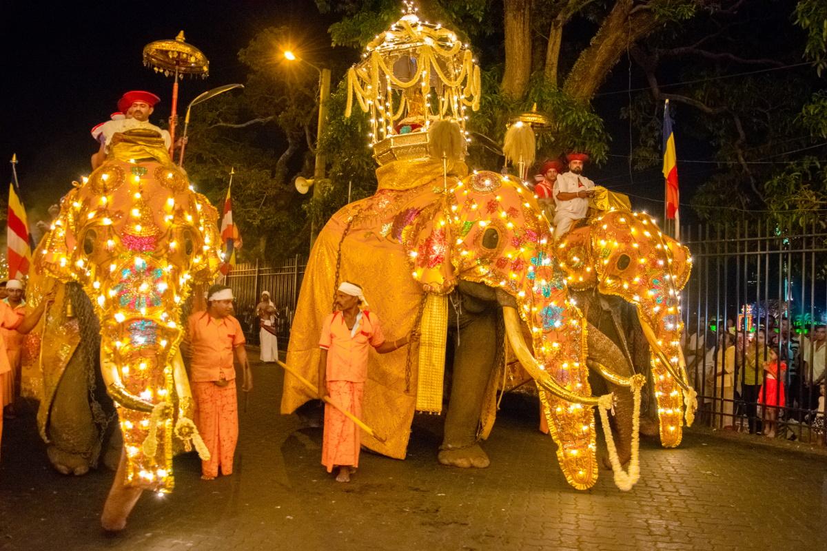 Elefanti Sri Lanka