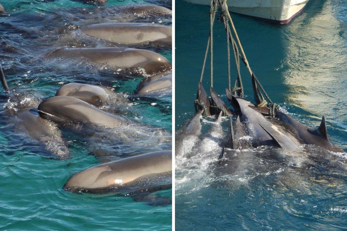 delfini baia taiji