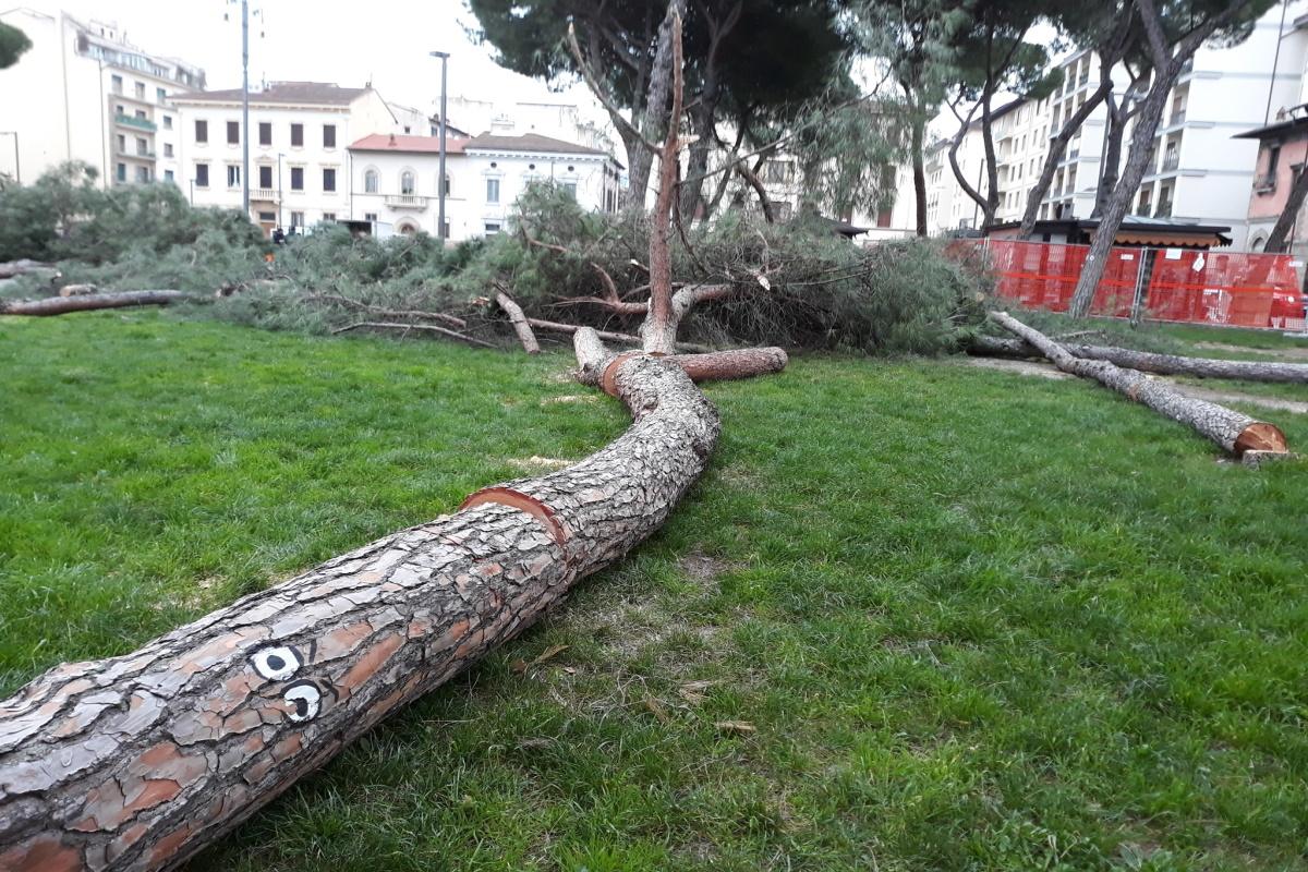 Alberi abbattuti Firenze