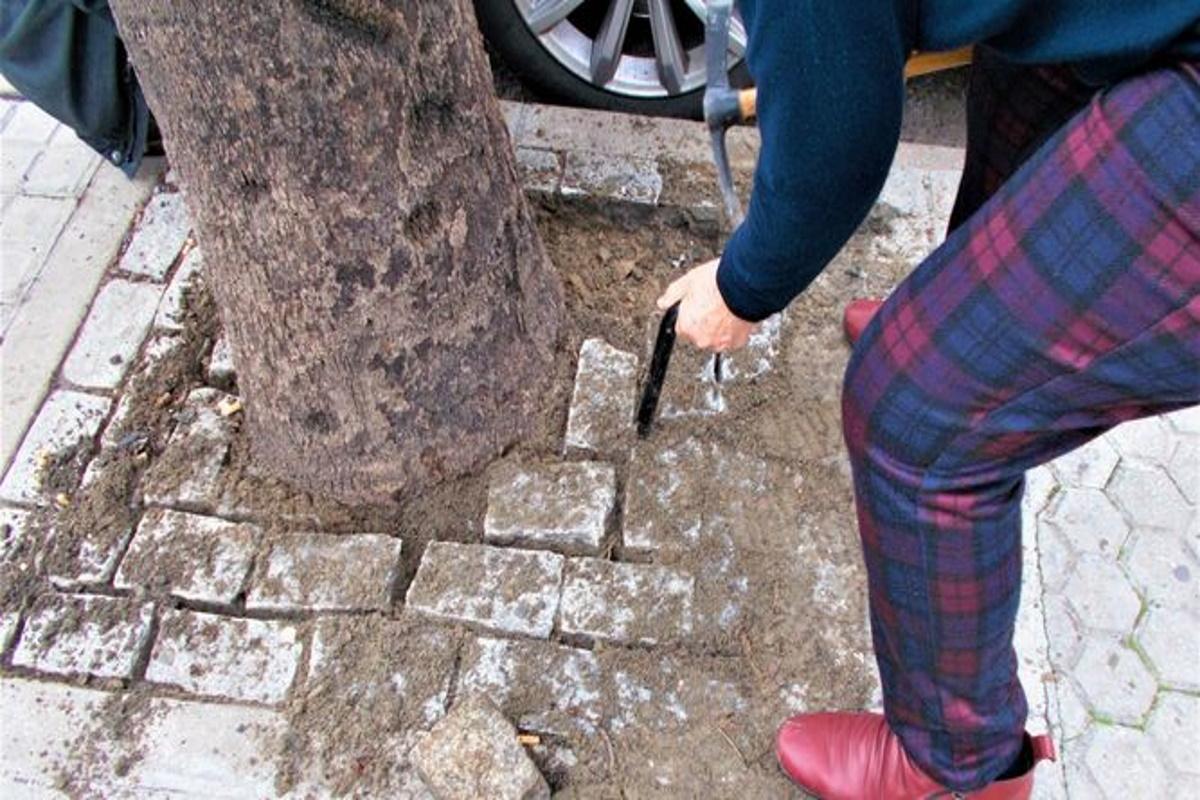 Liberazione alberi