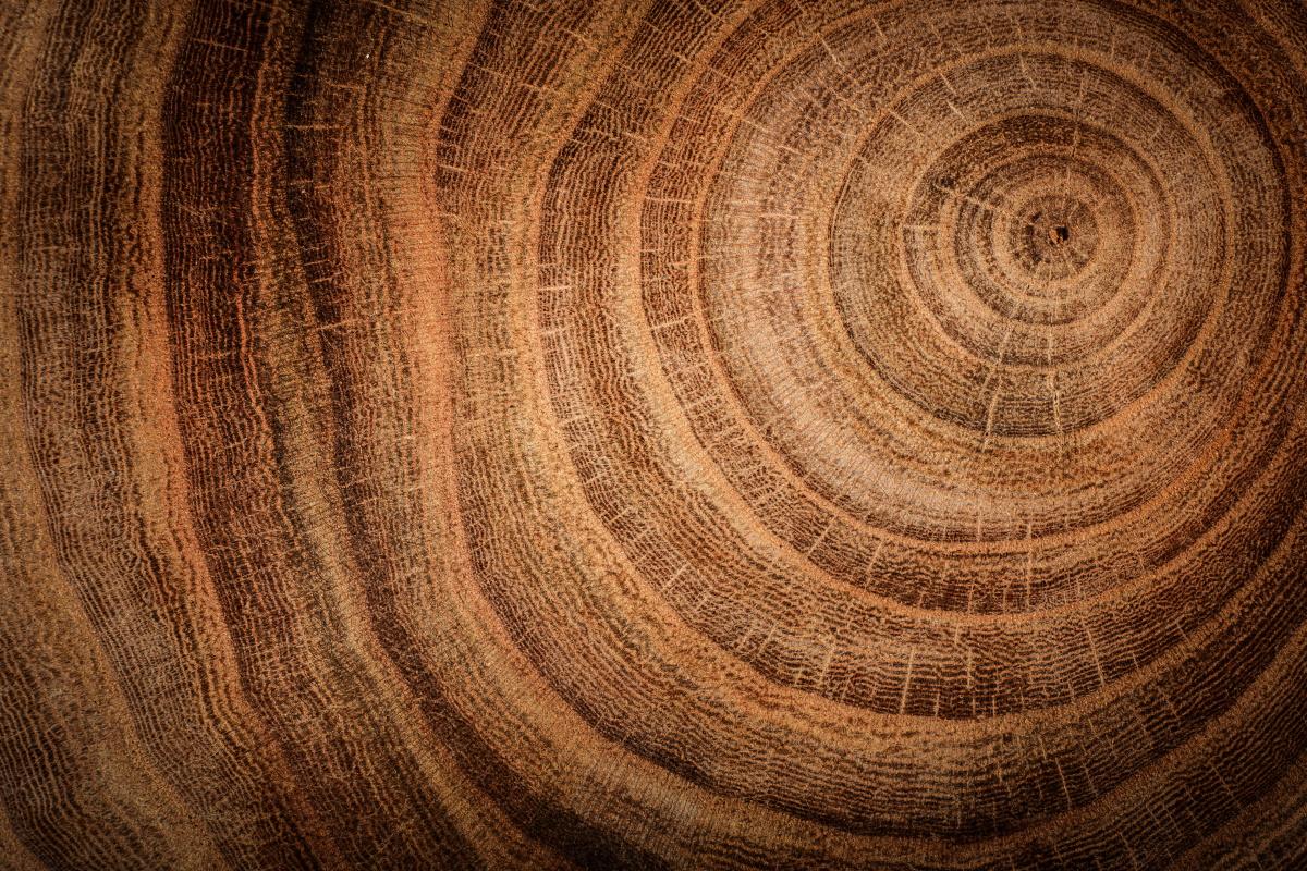 Anelli accrescimento alberi