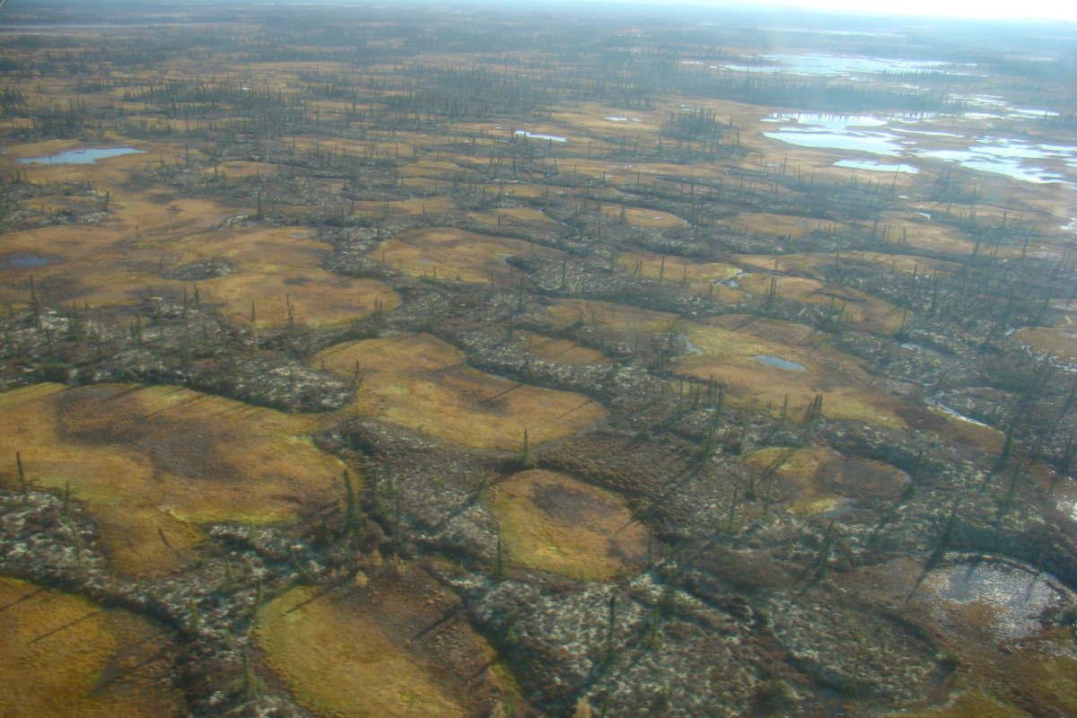 artico buchi permafrost