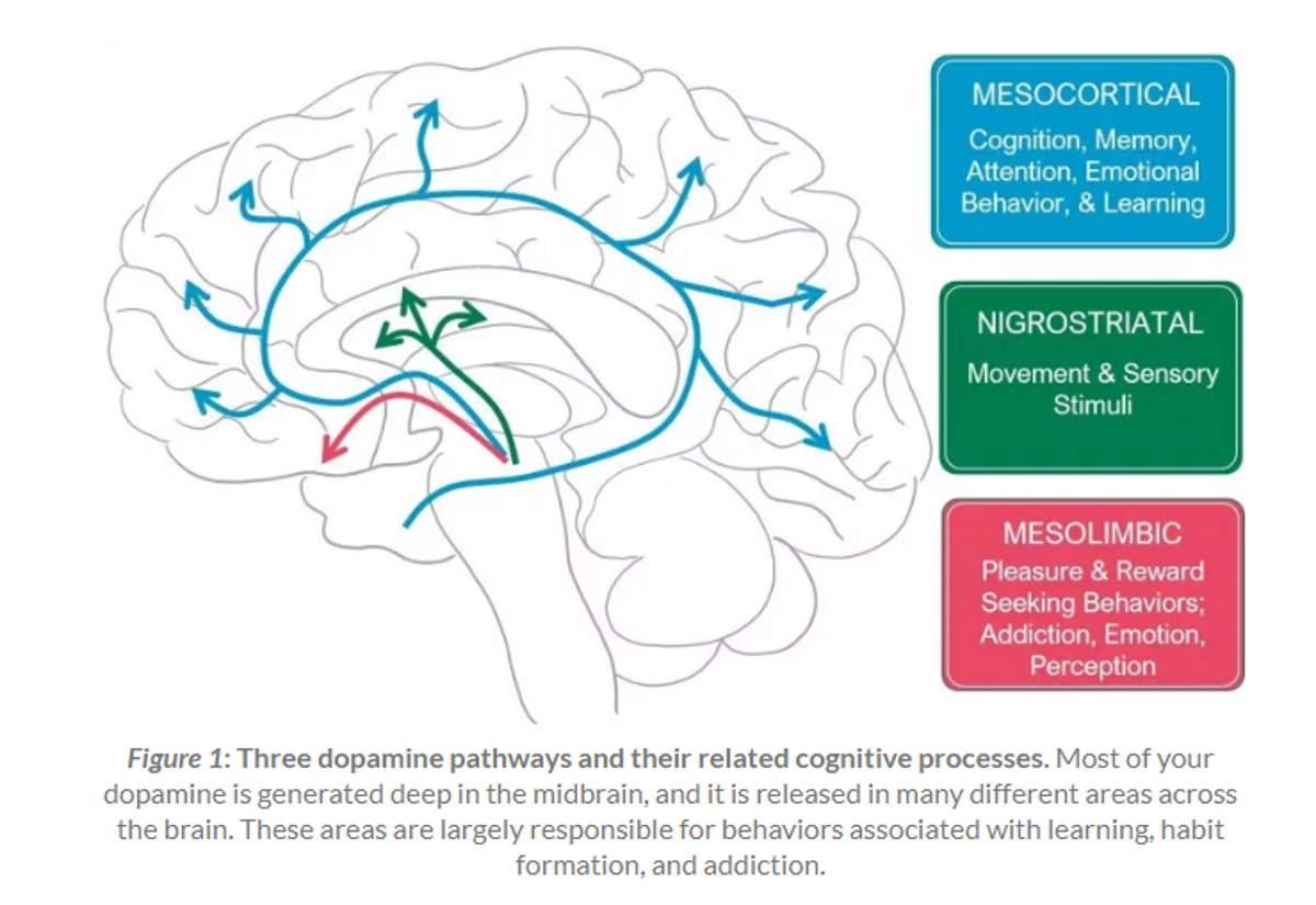 dopamina cervello