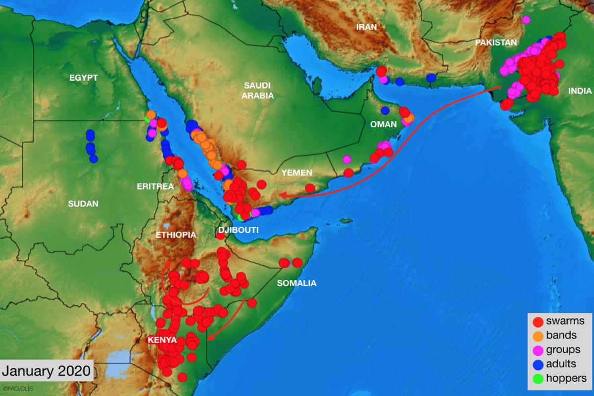 Invasione locuste Africa