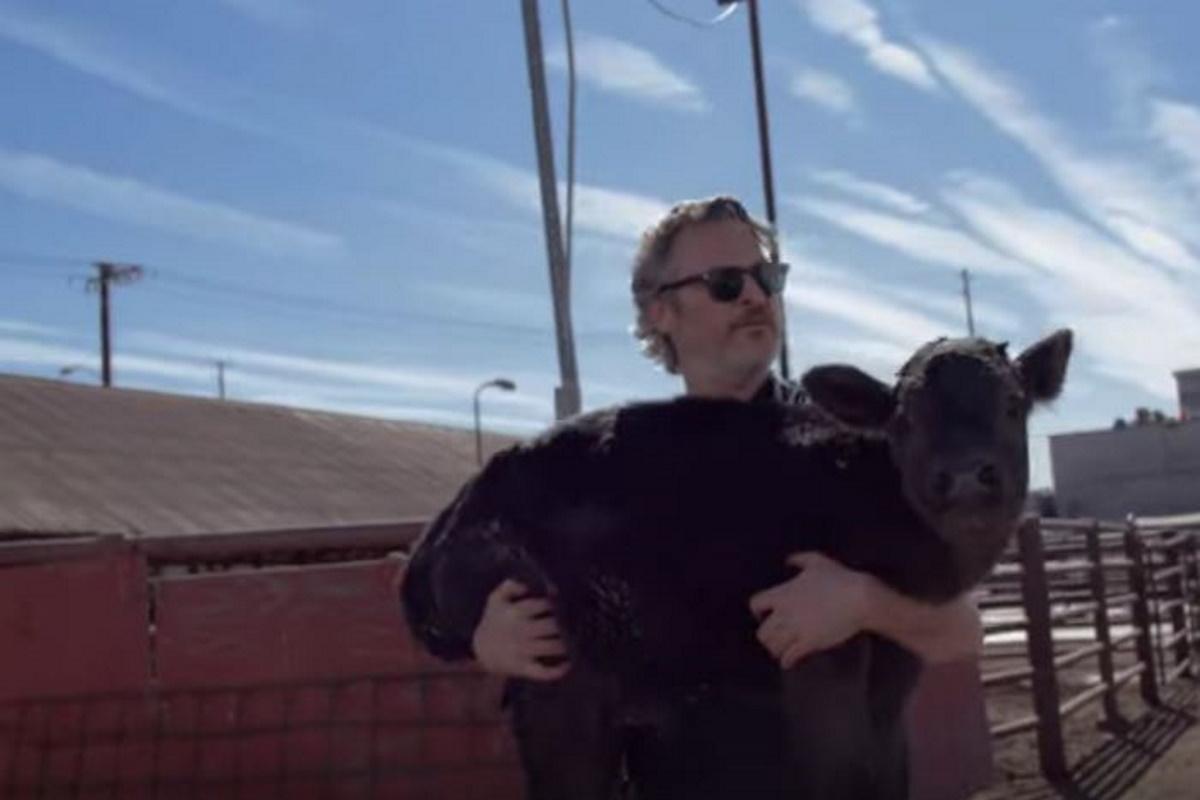 Joaquin Phenix salva vitellino
