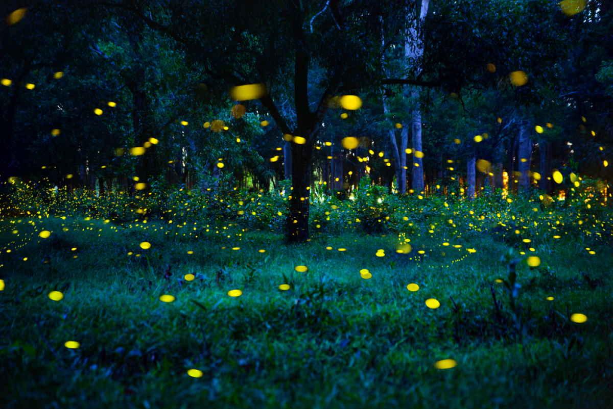 lucciole notte