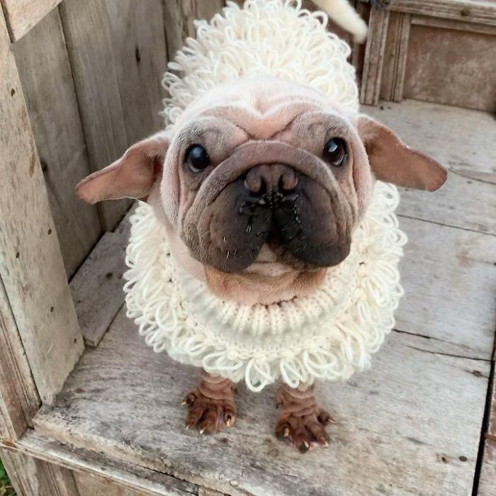 mork il cucciolo che assomiglia a Yoda