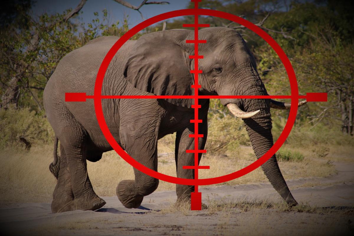 caccia elefanti