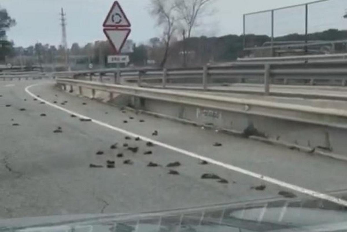 Strage di storni: centinaia di uccelli trovati morti sull'asfalto in  Catalogna - greenMe