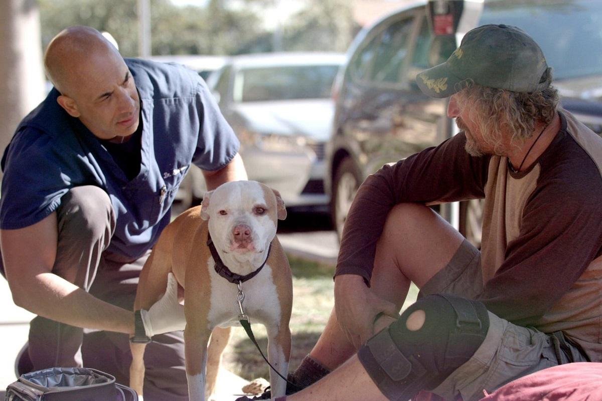 veterinario aiuta cani di strada