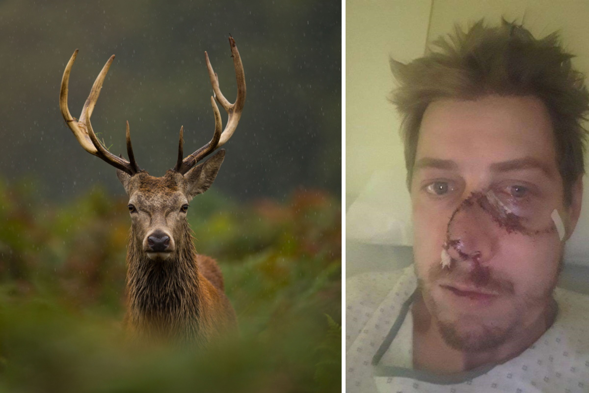 cacciatore cervo pelle