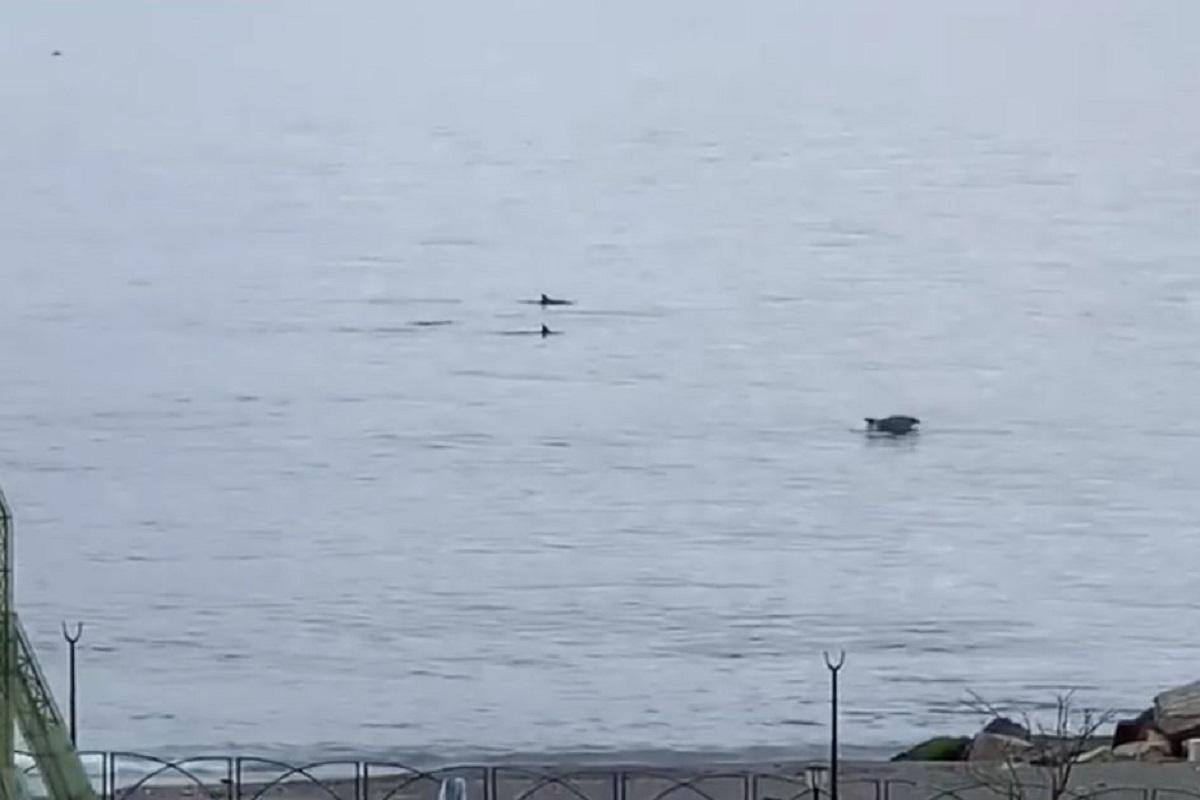 delfini reggio calabria