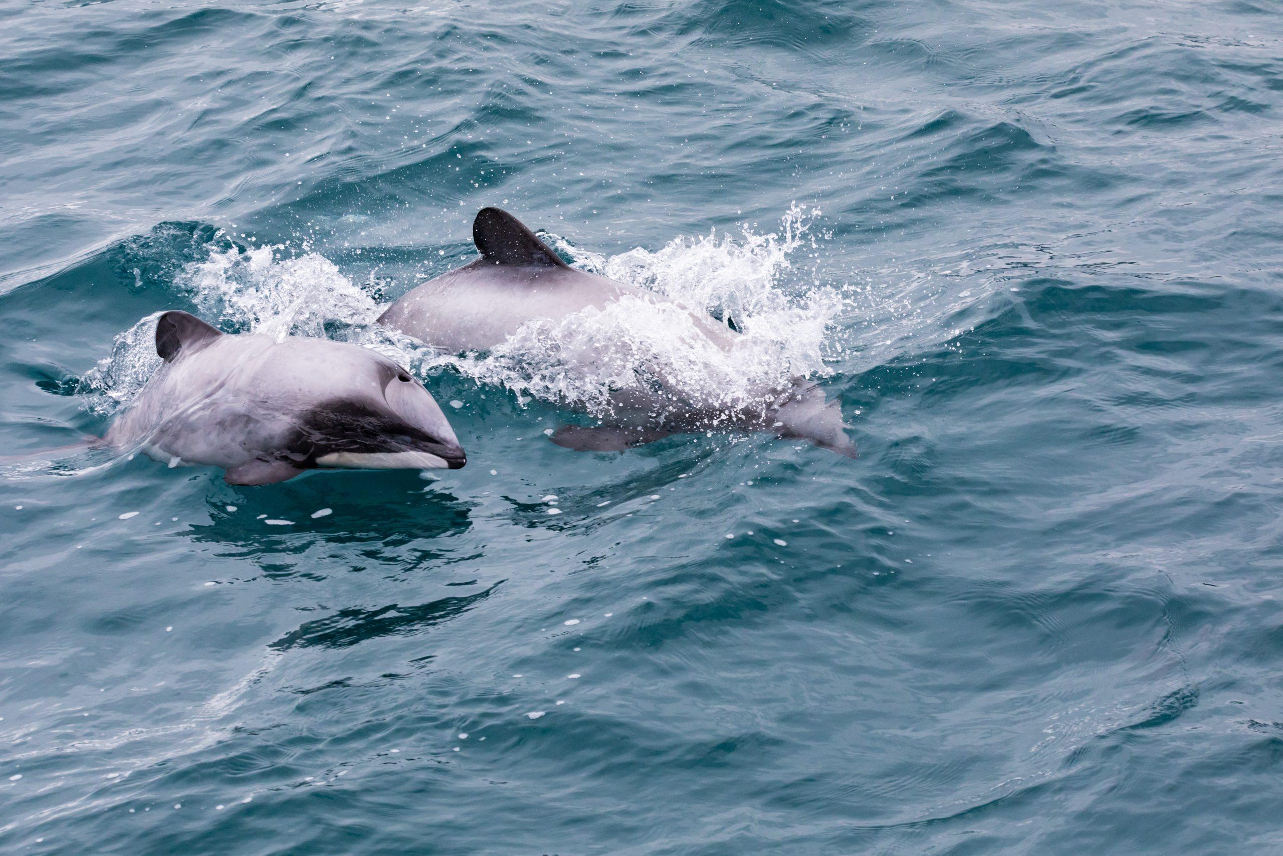 delfini cagliari