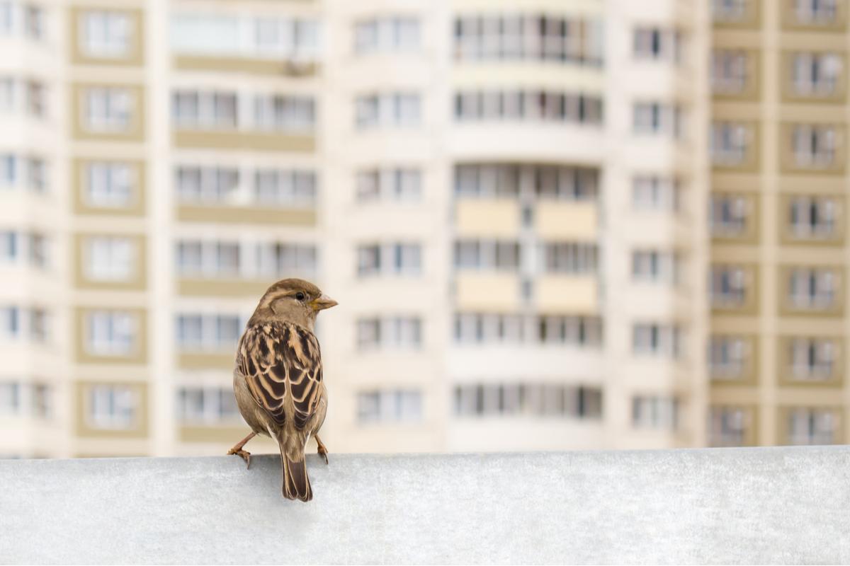 uccelli francia