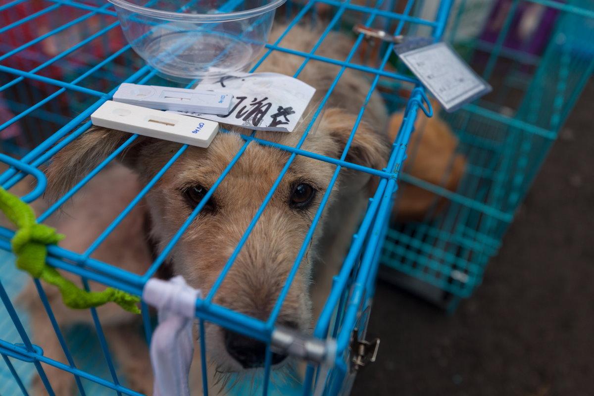 La Cina sta per vietare davvero il consumo di cani e gatti. Il Festival di Yulin ha i giorni contati?