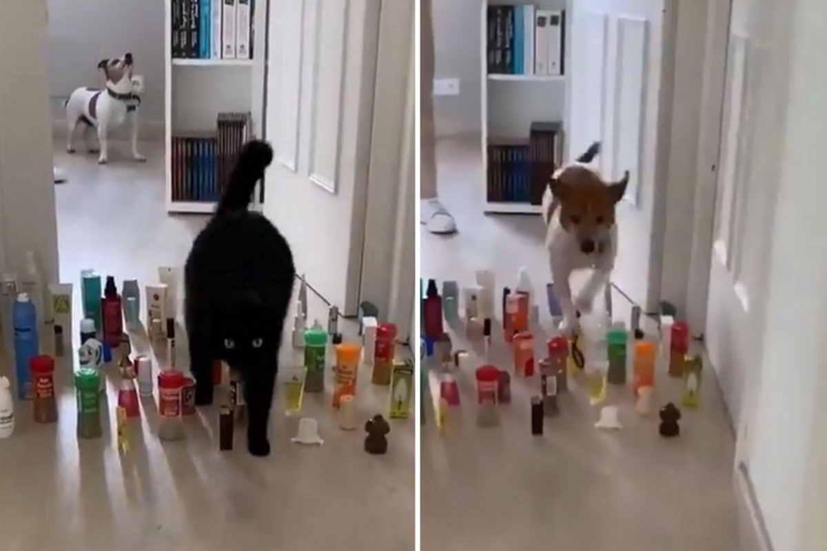 cani vs gatti