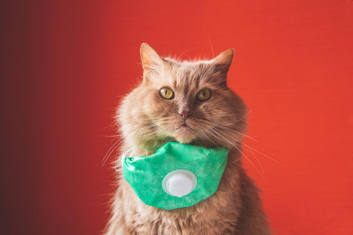 gatti coronavirus