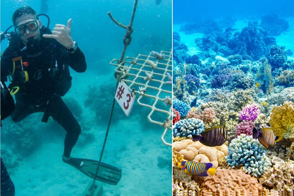 ricostruzione barriera corallina