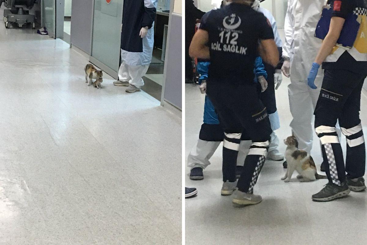 gatti ospedale