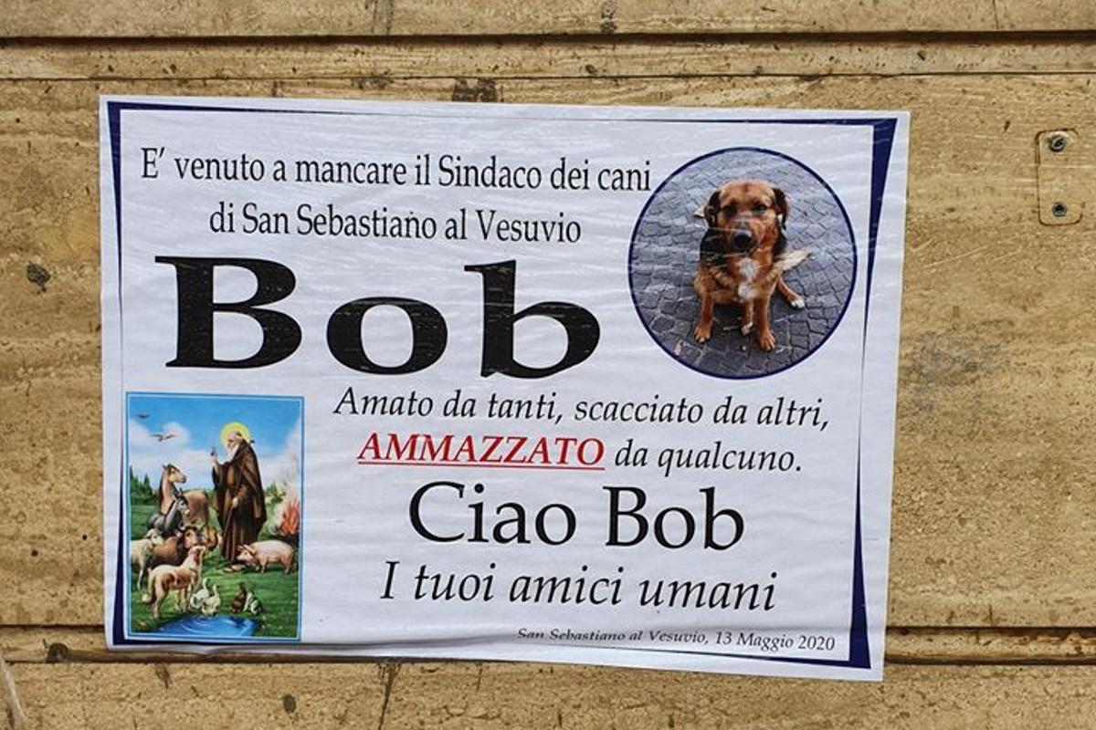 bob cane