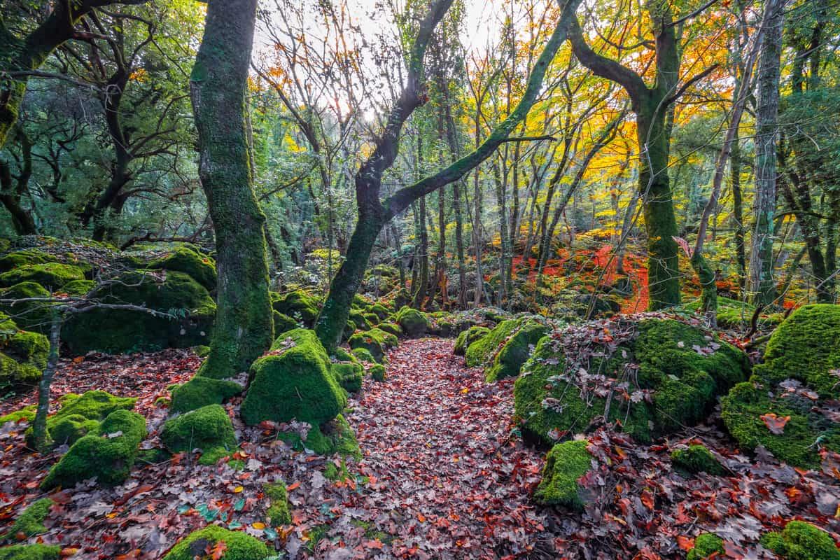 boschi incantati